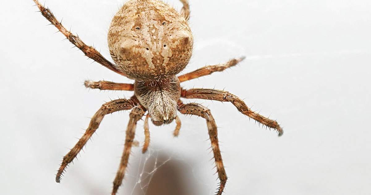 Pavúk v rohu pri okne