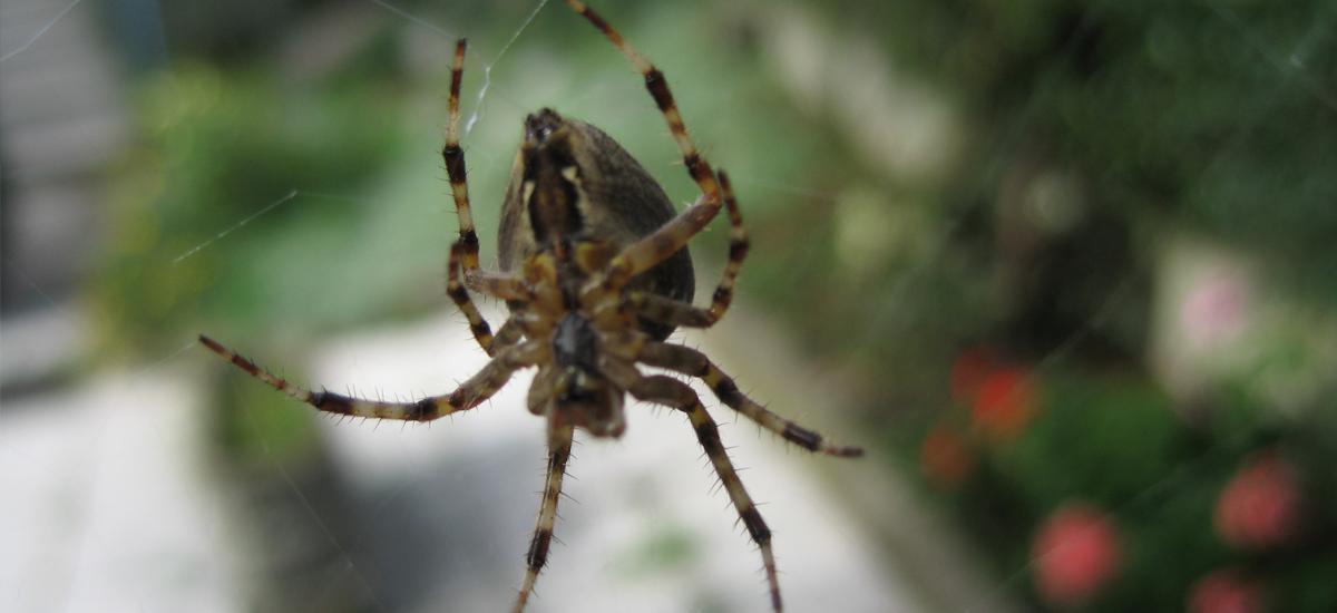 Nepríjemný hmyz, ktorý sa bojí viac ako Vy!